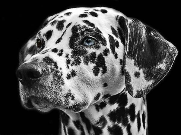hunderaser, finn, finn, hunderaser