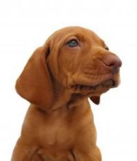Hvilken hund passer for meg test canis